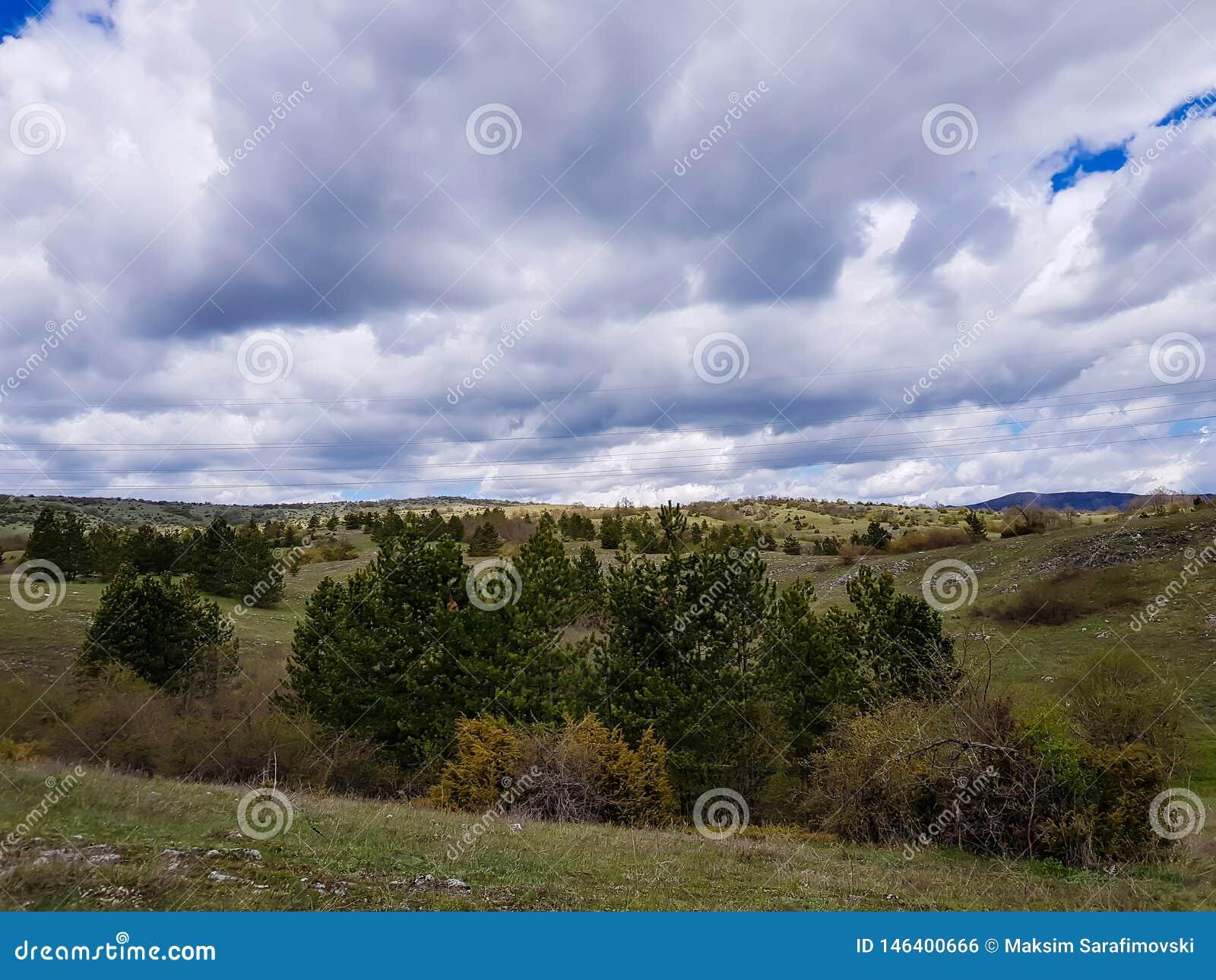 Campo montanhoso da primavera, paisagem maravilhosa com prado gramíneo e montes florestados