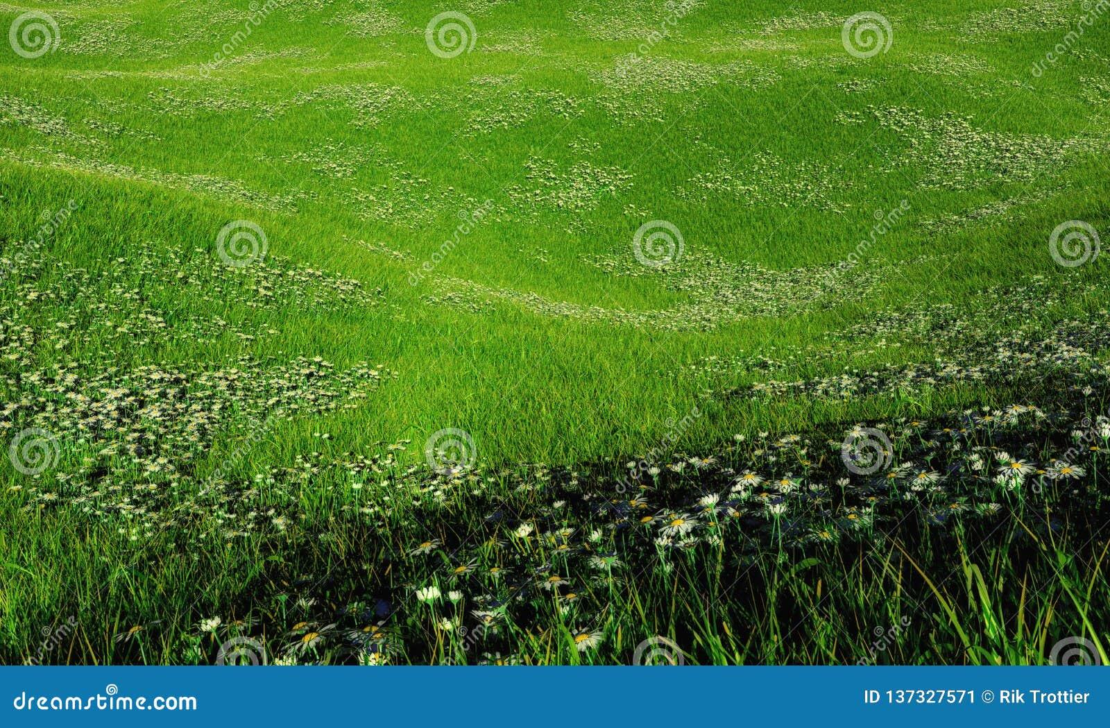 Campo montanhoso das margaridas