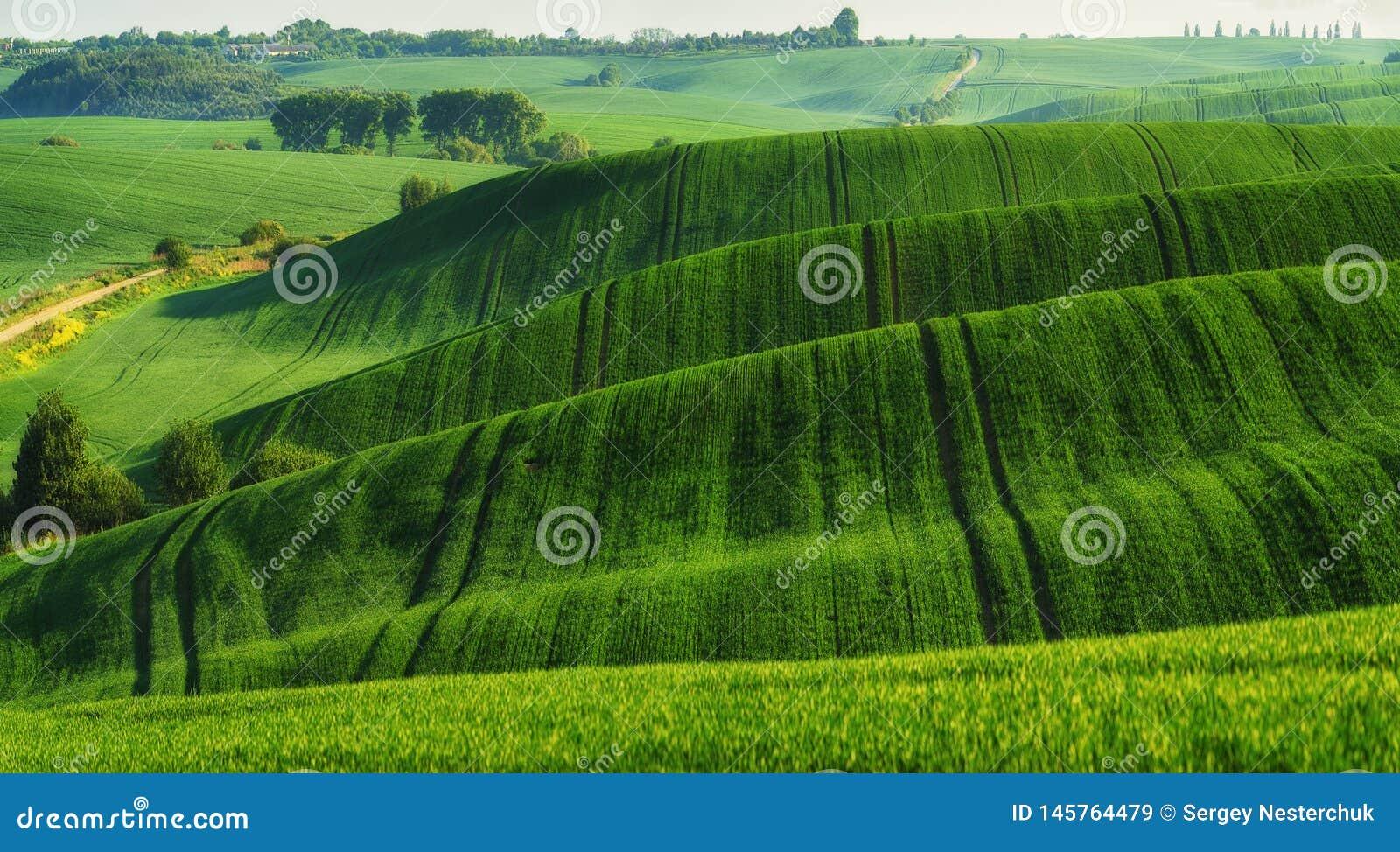 Campo montanhoso Montes da mola