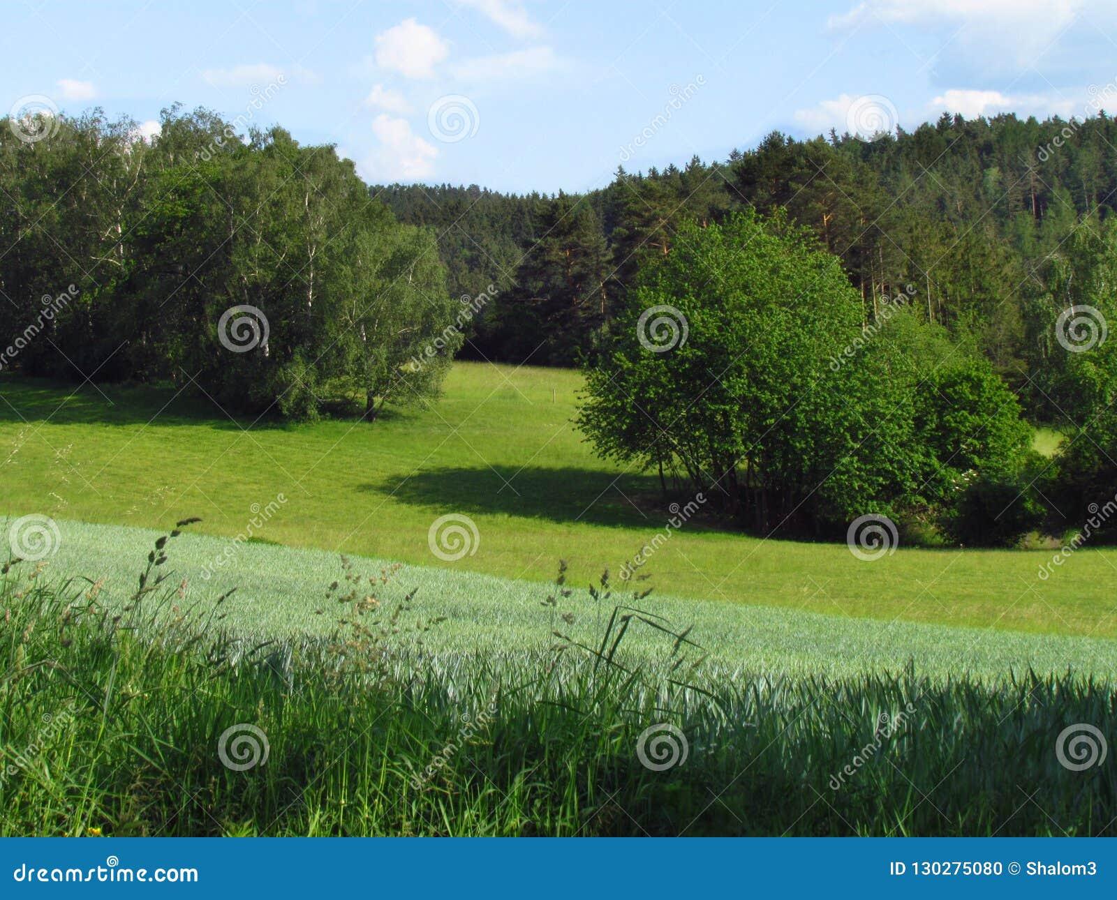 Campo montanhoso rural do verão com o prado, as tentativas e as nuvens do verde esmeralda no céu