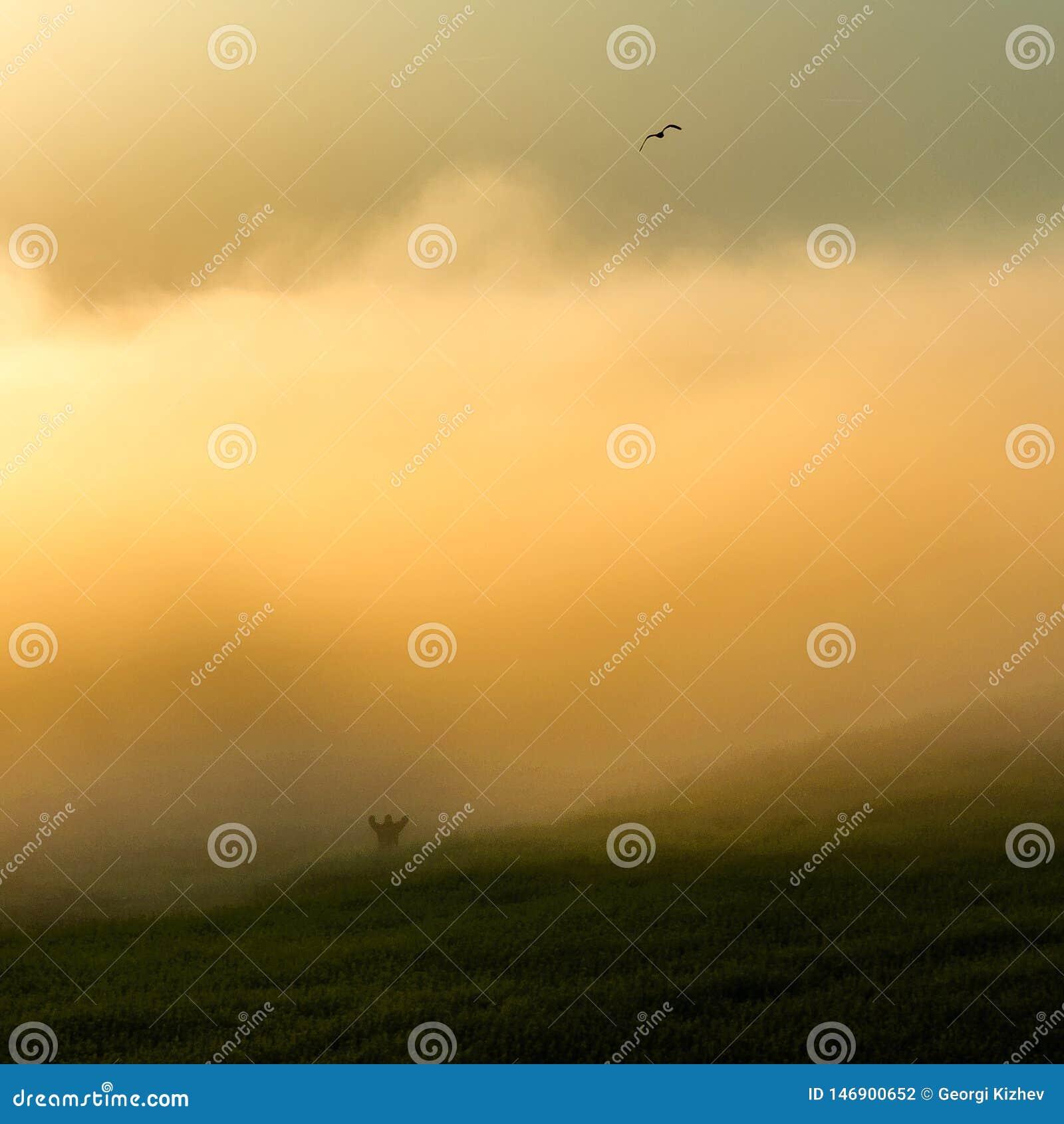 Campo nebbioso