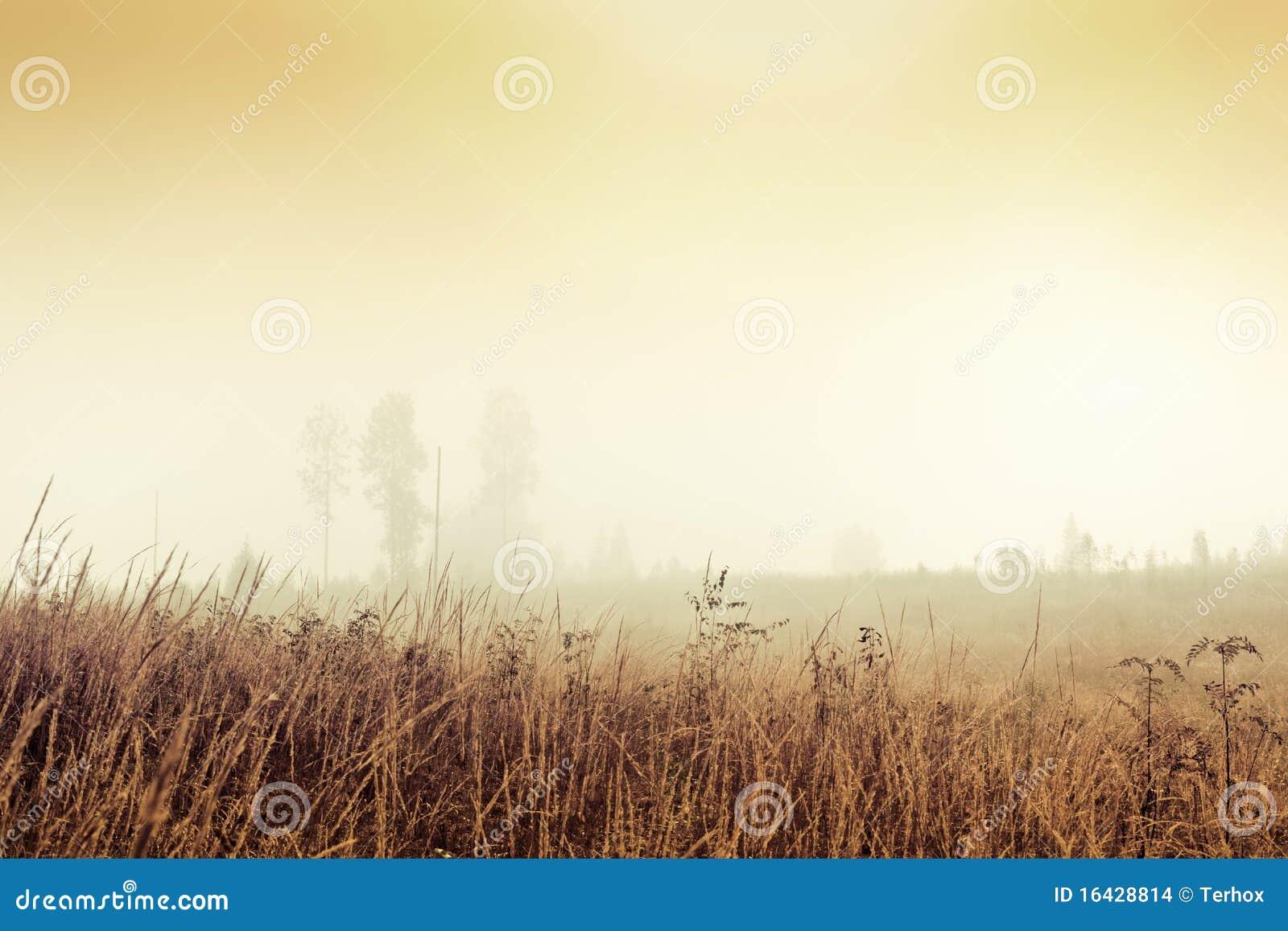 Campo nevoento dourado