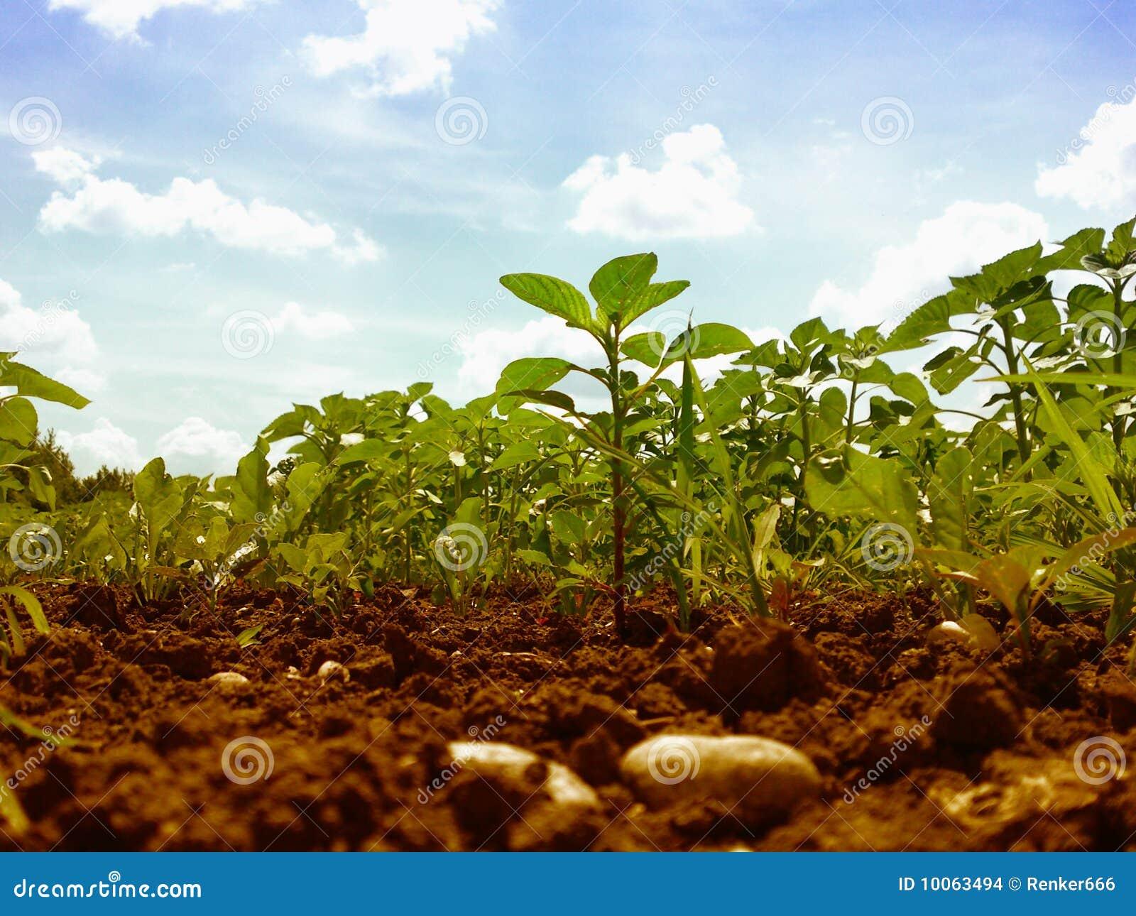 Campo, plantas e céu