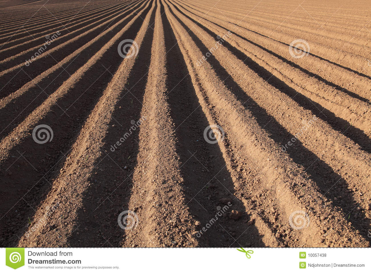 Campo Ploughed