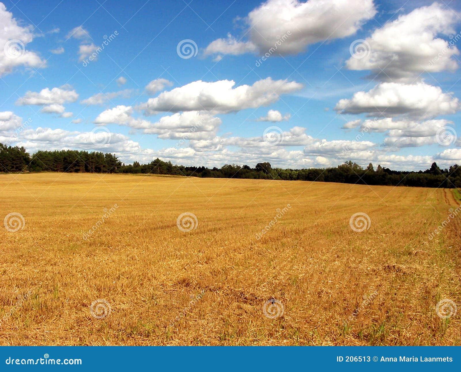 Campo raccolto