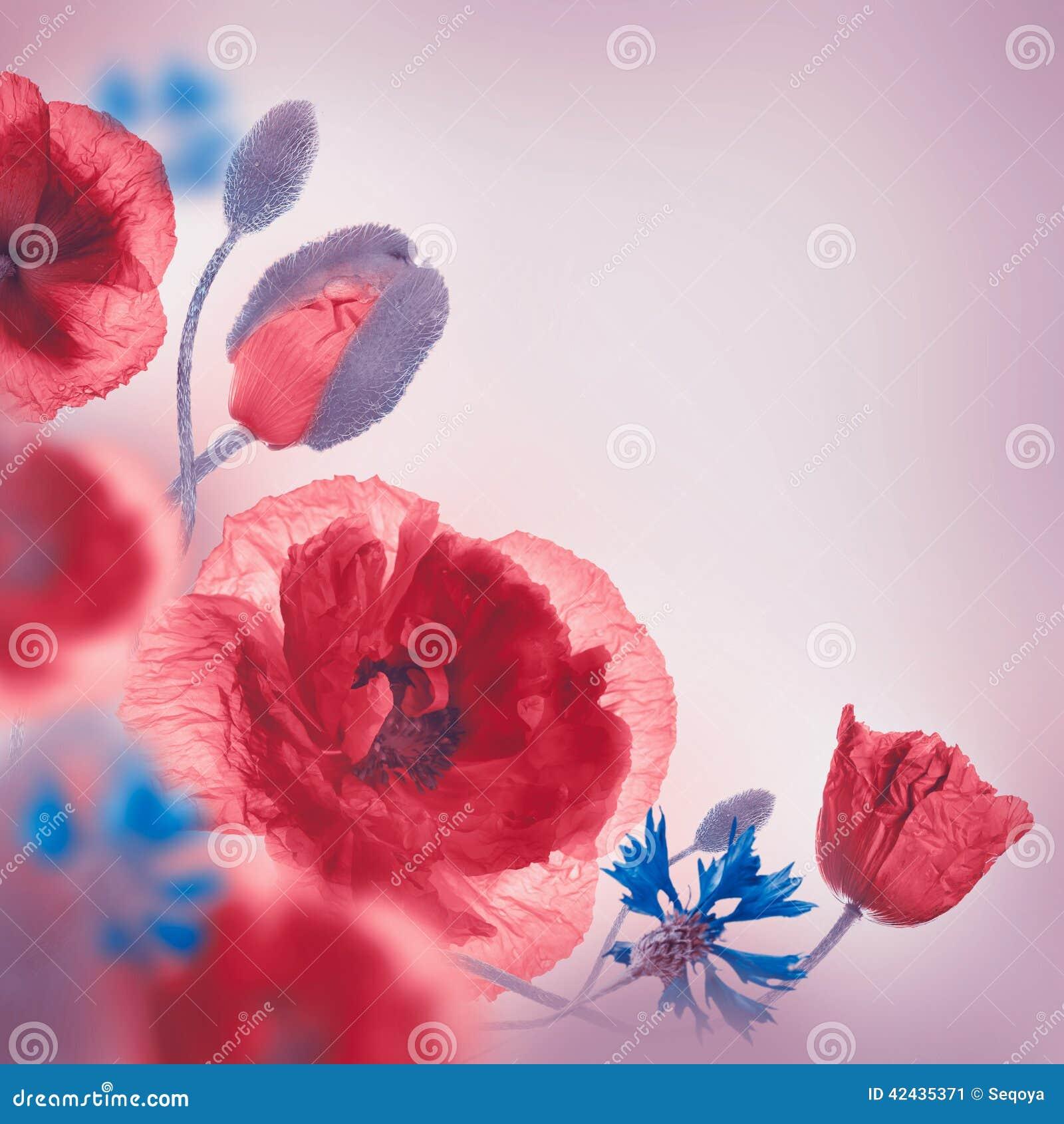 Campo rojo de las amapolas y acianos azules