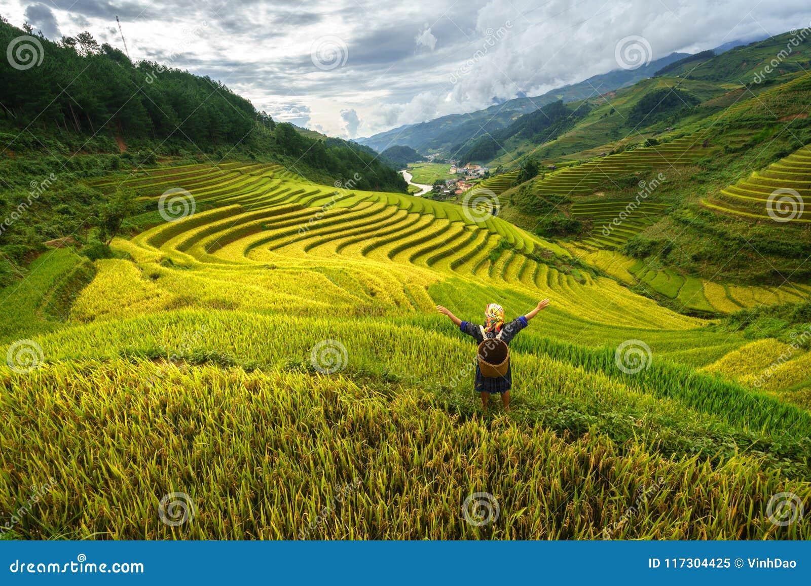 Campo Terraced do arroz na estação da colheita com a mulher da minoria étnica no campo em MU Cang Chai, Vietname