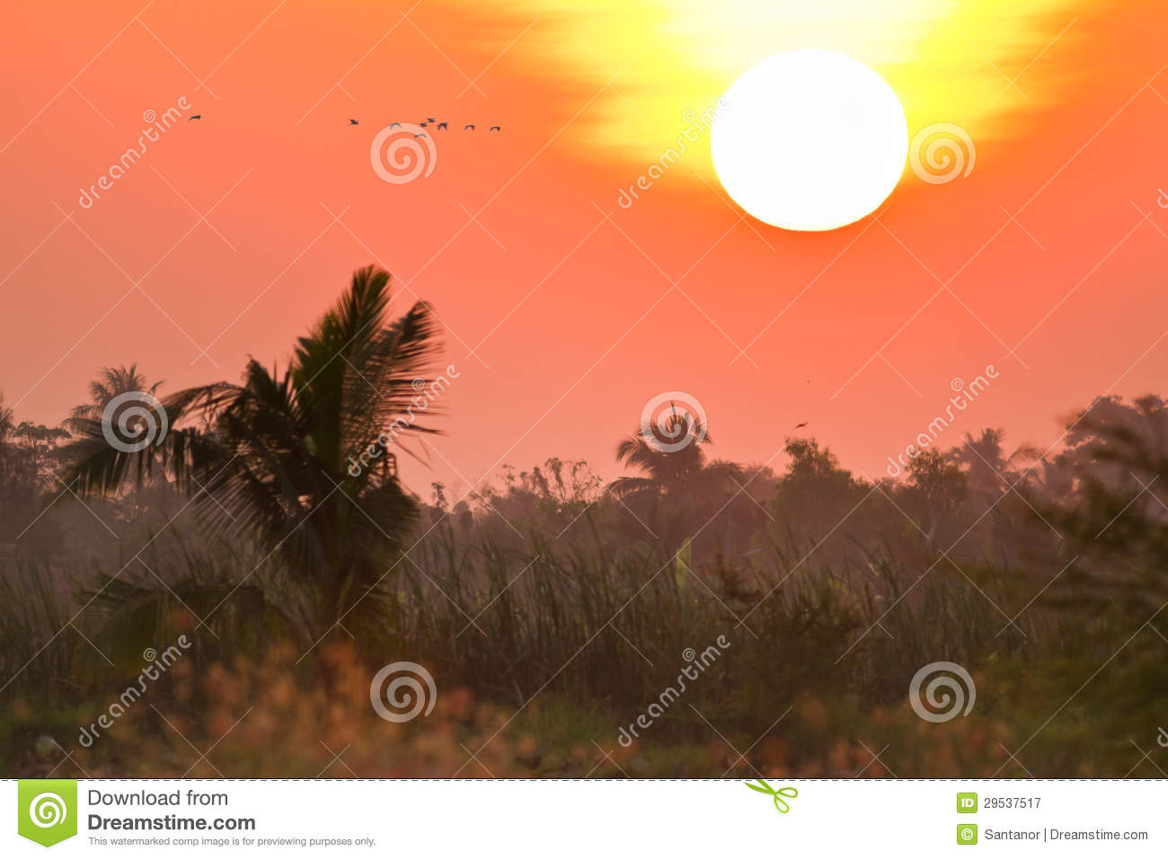 Campo tropical no por do sol