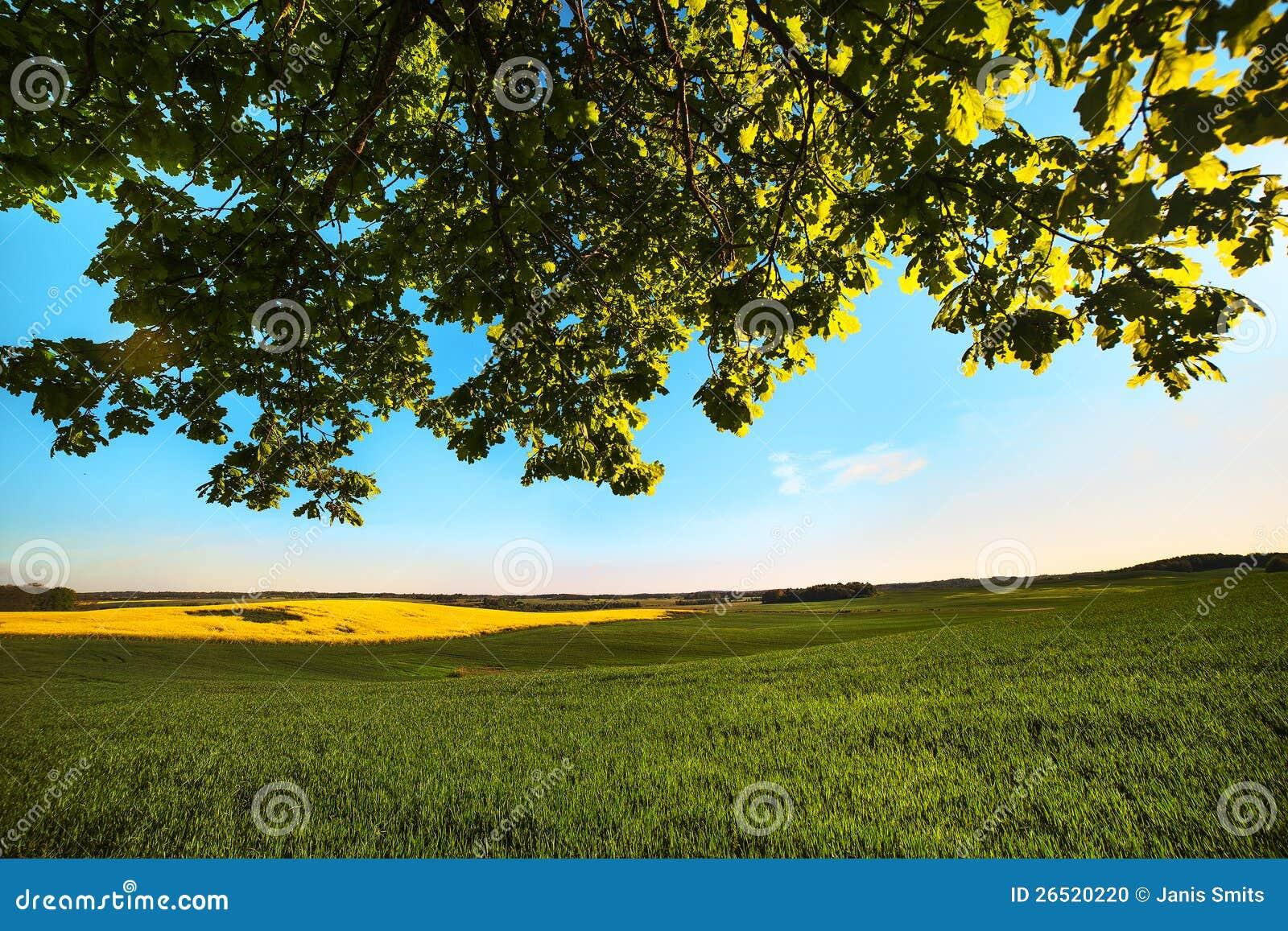 Campo verde.