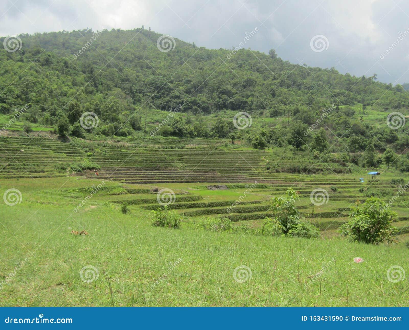 Campo verde al mediados de montañas