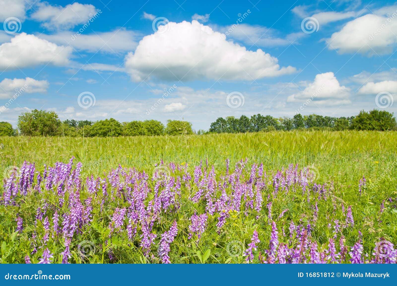 Campo verde com flores