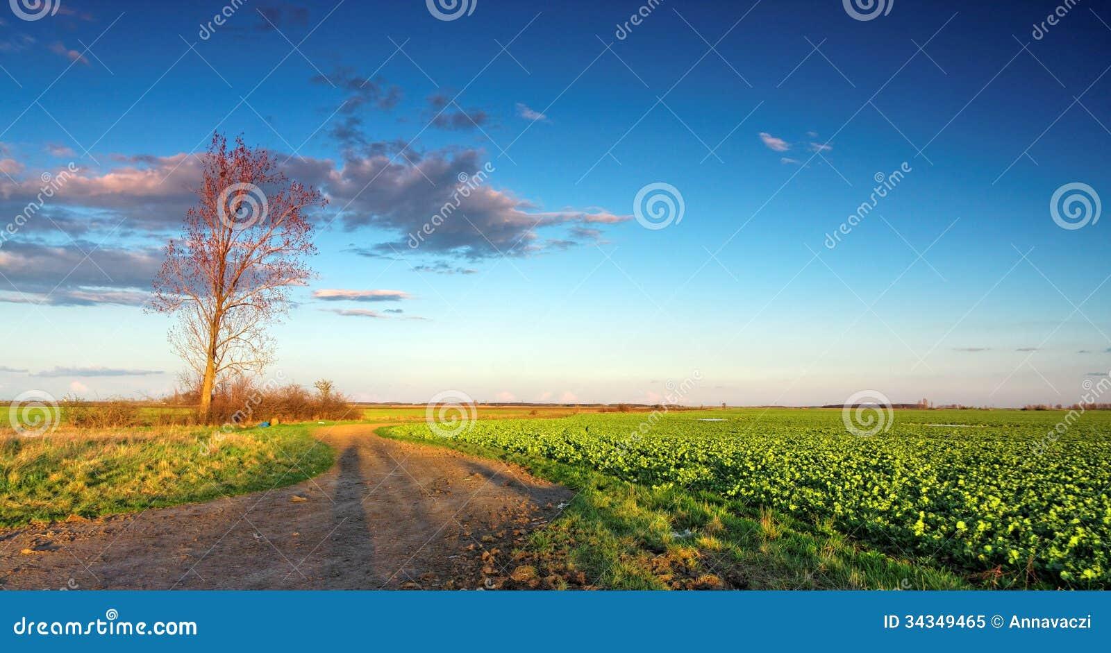 Campo verde con cielo blu