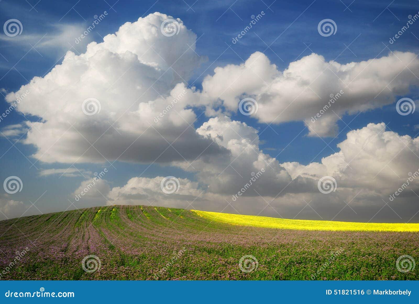 Campo verde con las flores y la rabina debajo del cielo nublado azul
