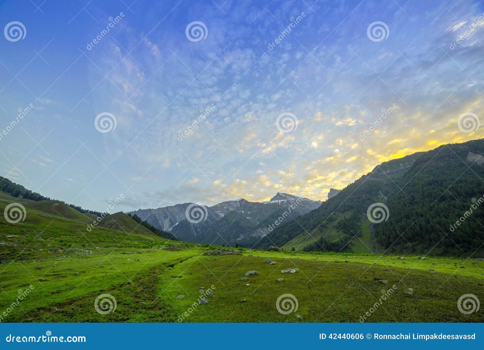 Campo verde de la mañana