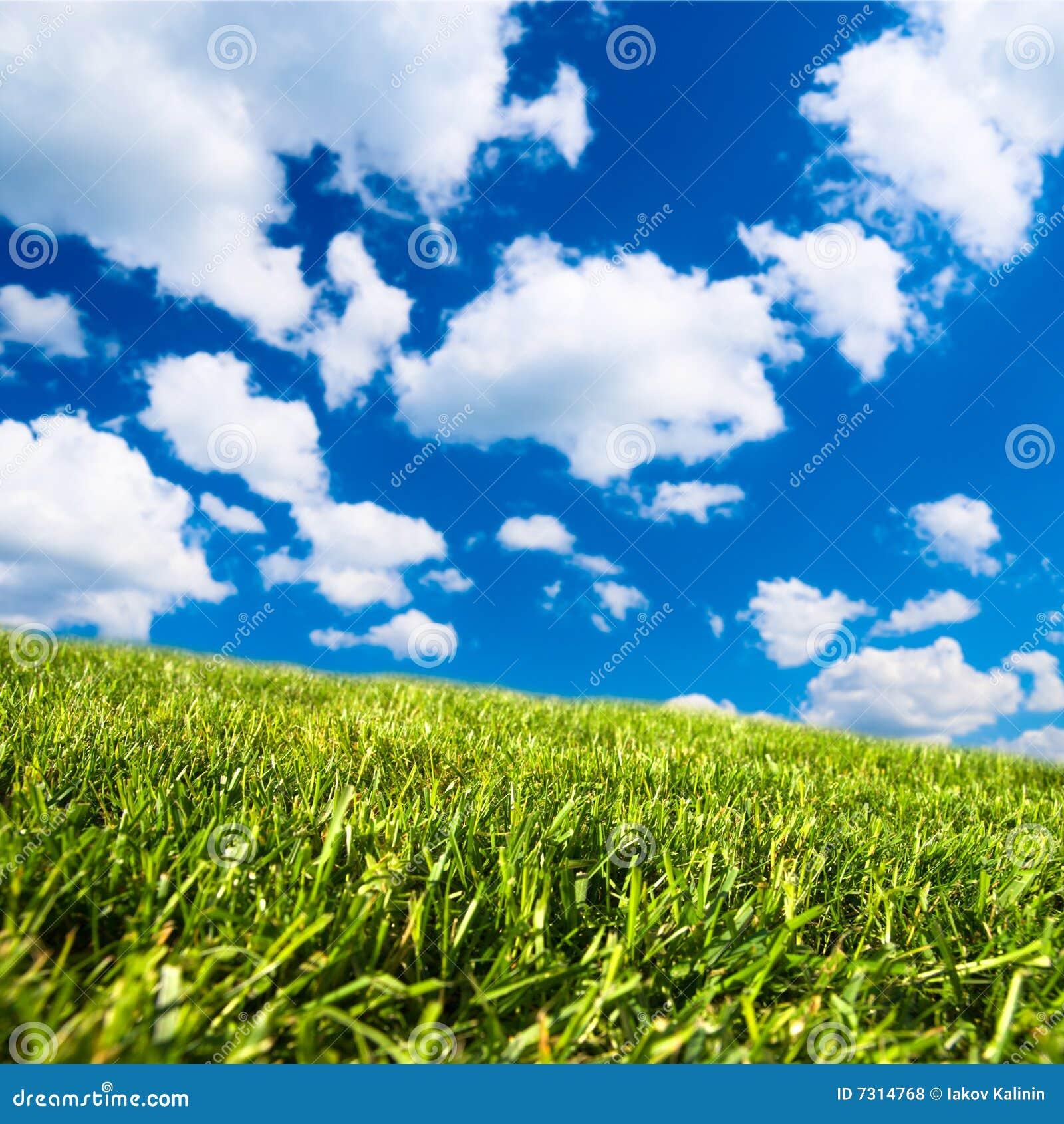Campo verde di estate