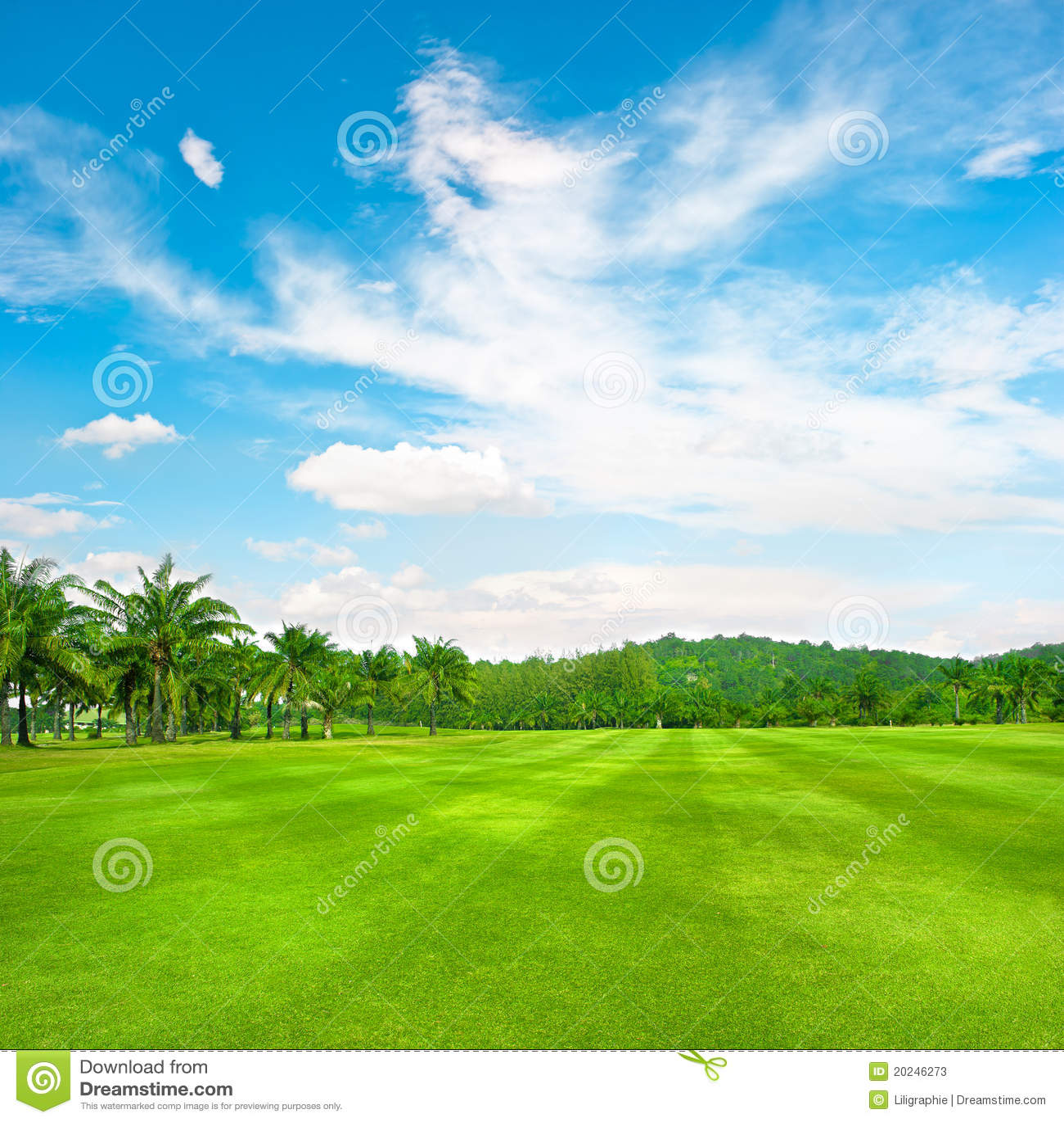 Campo verde do golfe com as palmas sobre o céu nebuloso