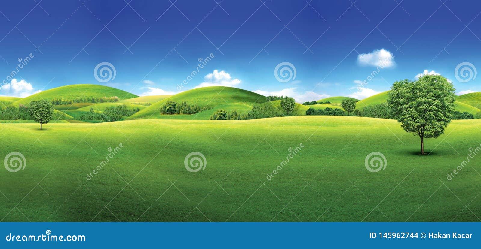 Campo verde y cielo azul del campo de hierba verde y del cielo azul brillante