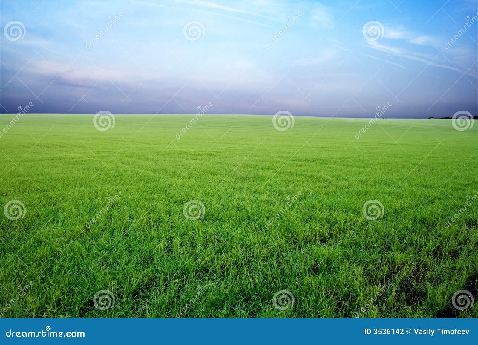 Campo verde y cielo tempestuoso