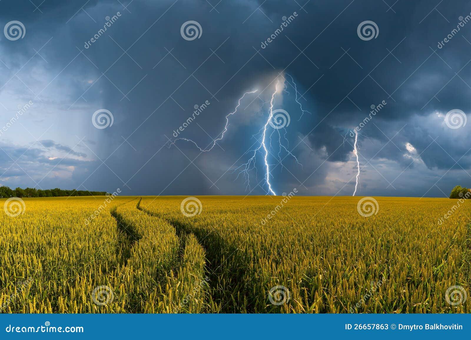 Campo y tempestad de truenos grandes de trigo