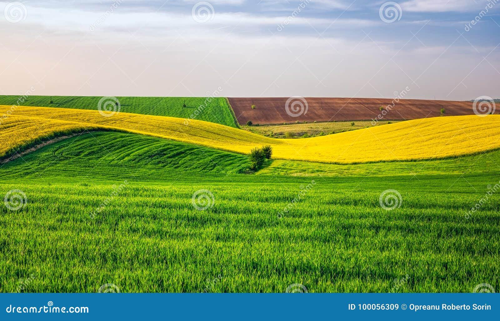 Campos agriculturais