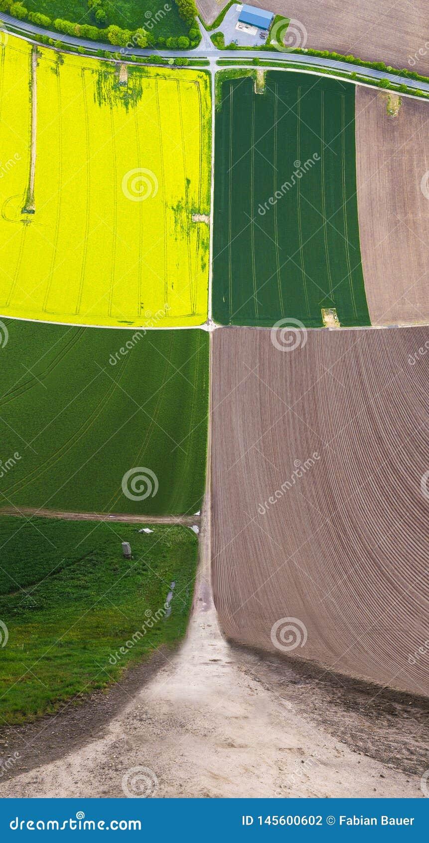 Campos colgantes amarillos y verdes