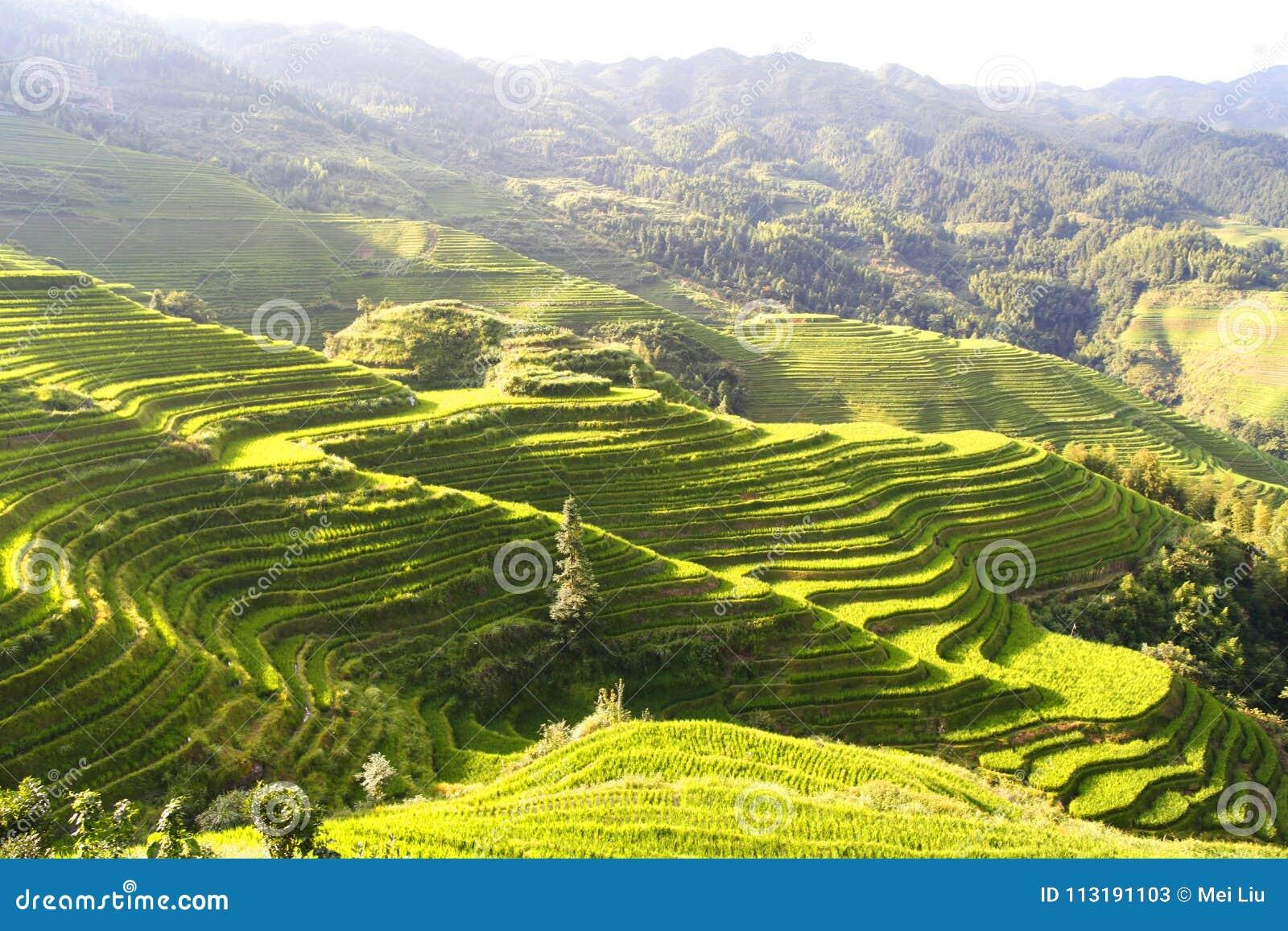 Campos colgantes verdes, terraza a lo largo de las montañas con el shinningn de la sol
