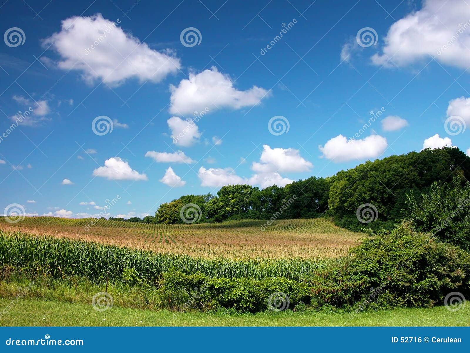 Campos com nuvens