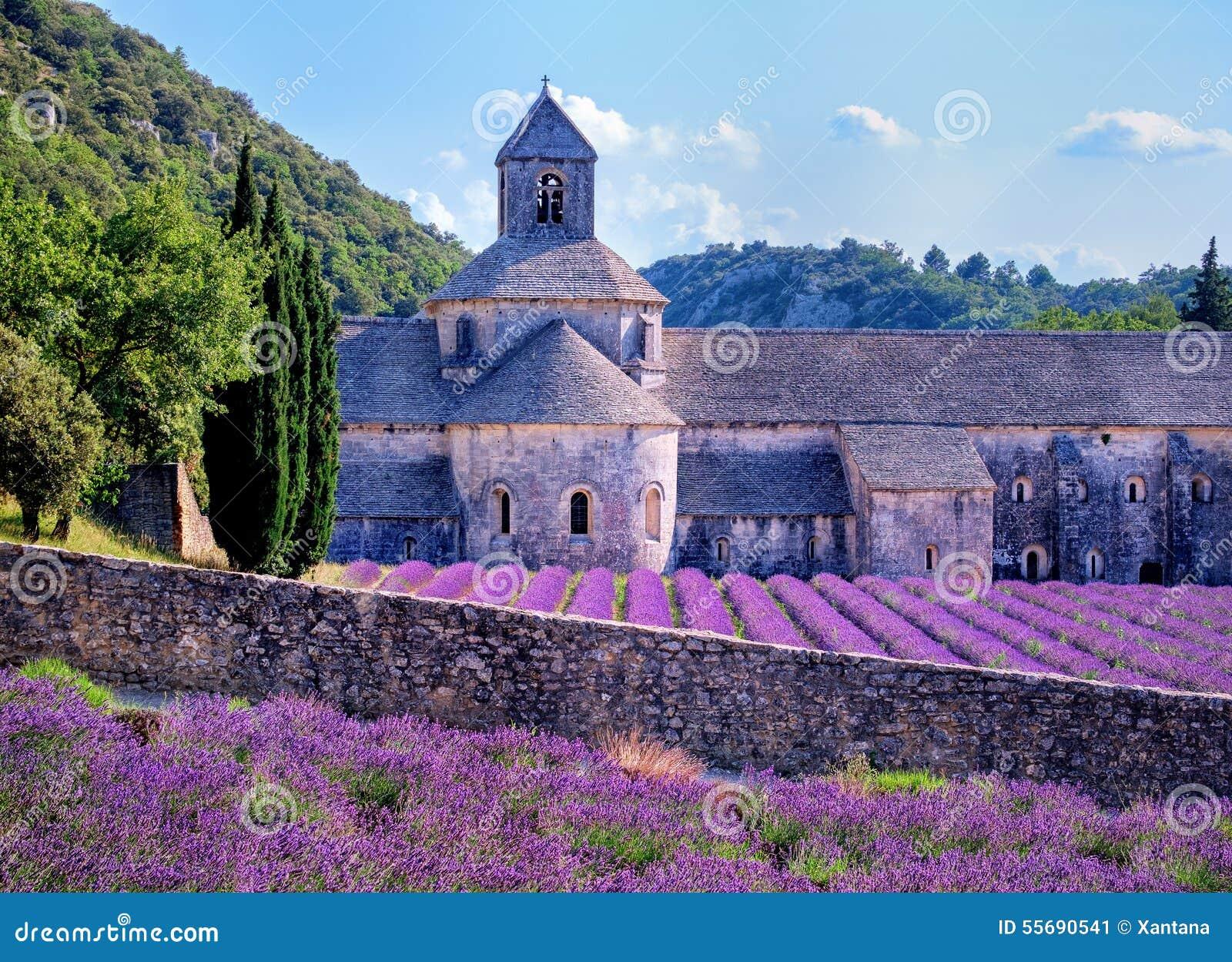 Campos da alfazema, Provence, França