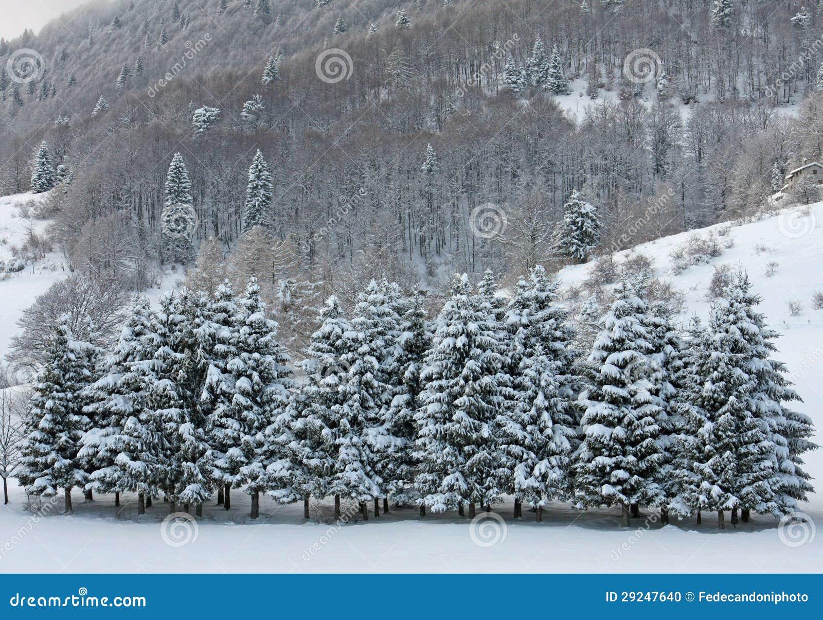 Download Campos Da Neve E De árvores Cobertos De Neve Nas Dolomites No Inverno Foto de Stock - Imagem de árvore, diário: 29247640
