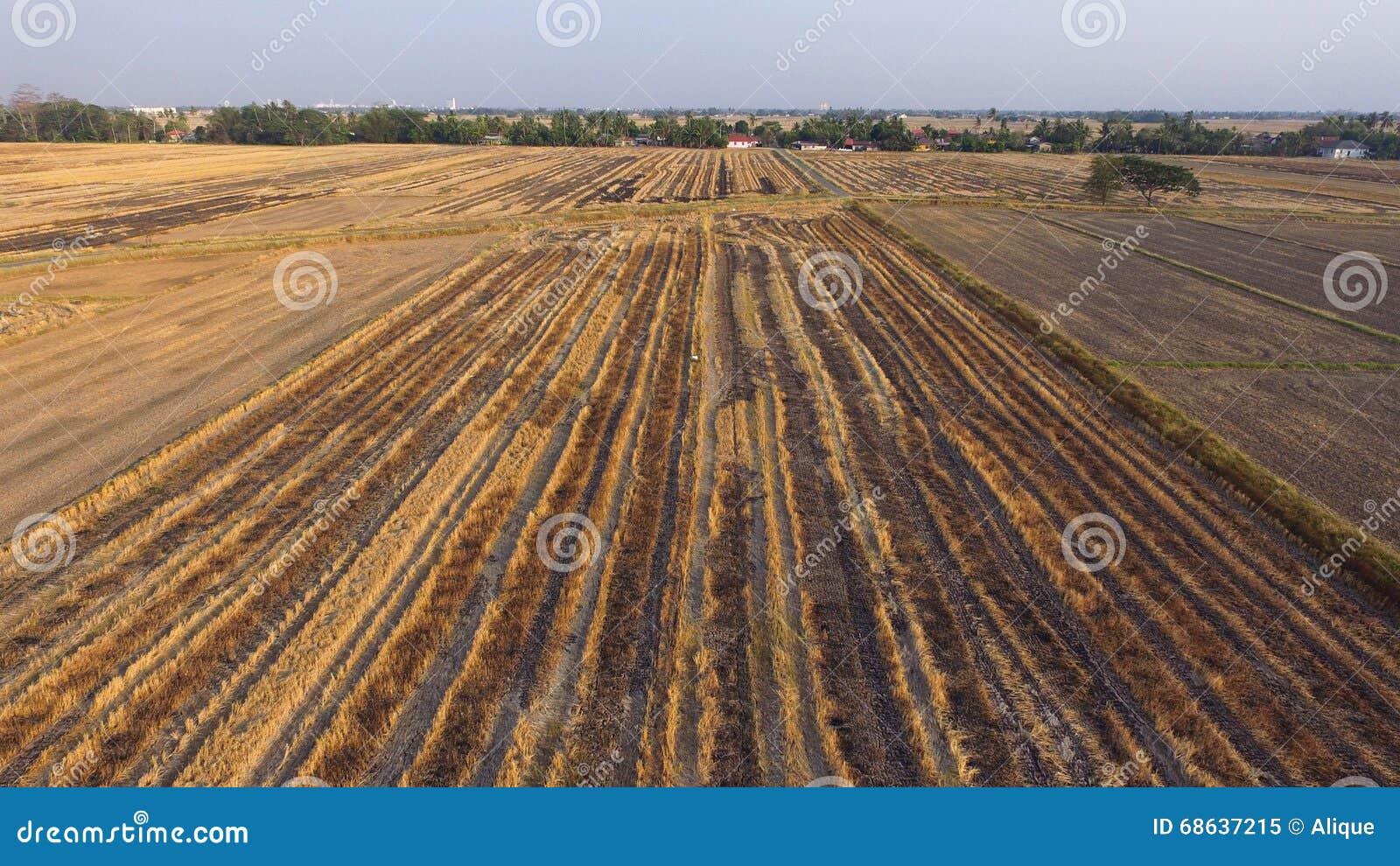 Campos de almofada secos