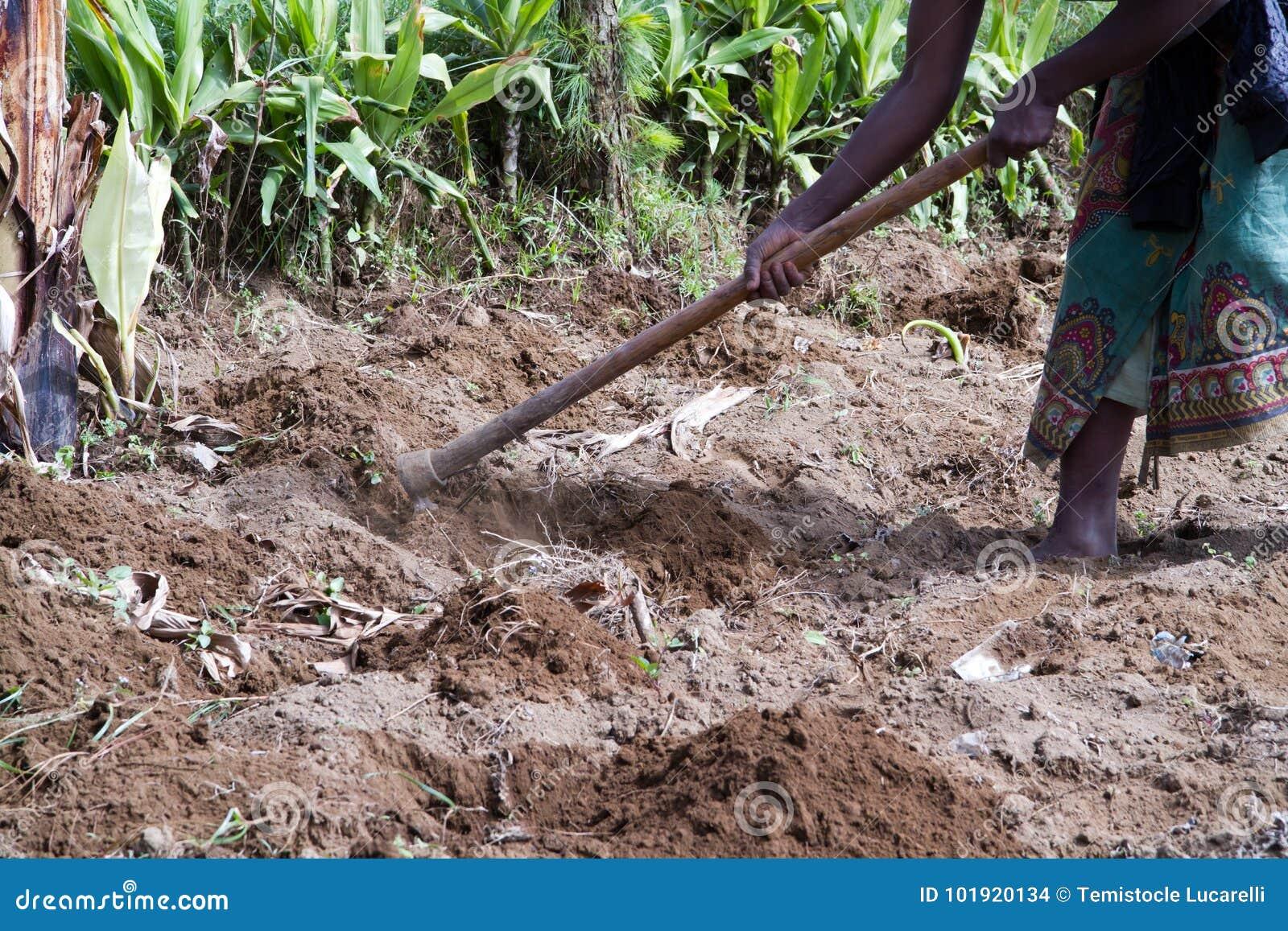 Campos de cultivo em África