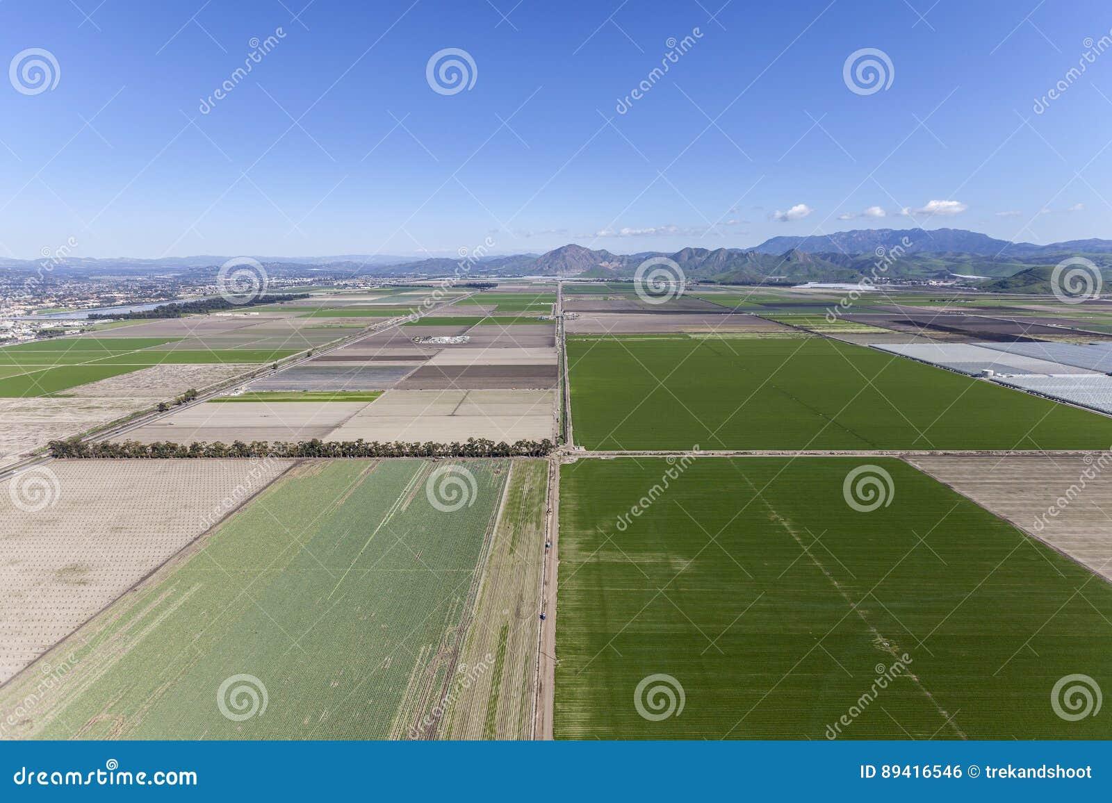 Campos de exploração agrícola do verde da mola de Camarillo Califórnia