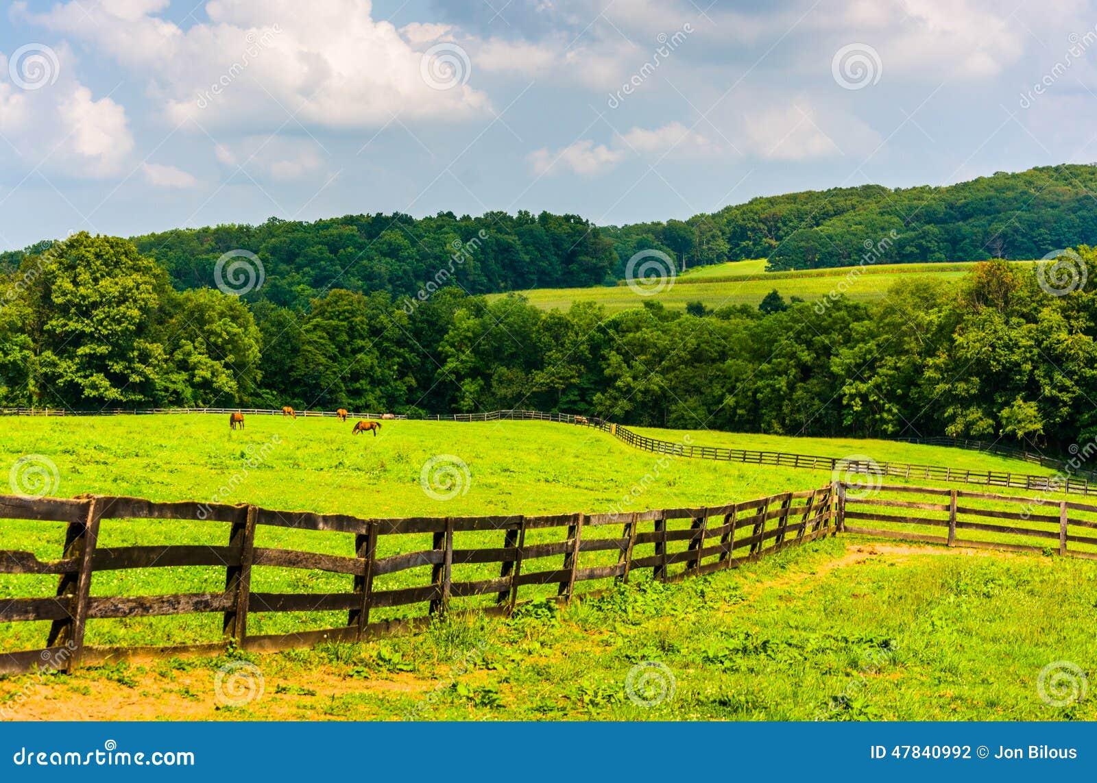 Campos de exploração agrícola e Rolling Hills no Condado de York rural, Pensilvânia