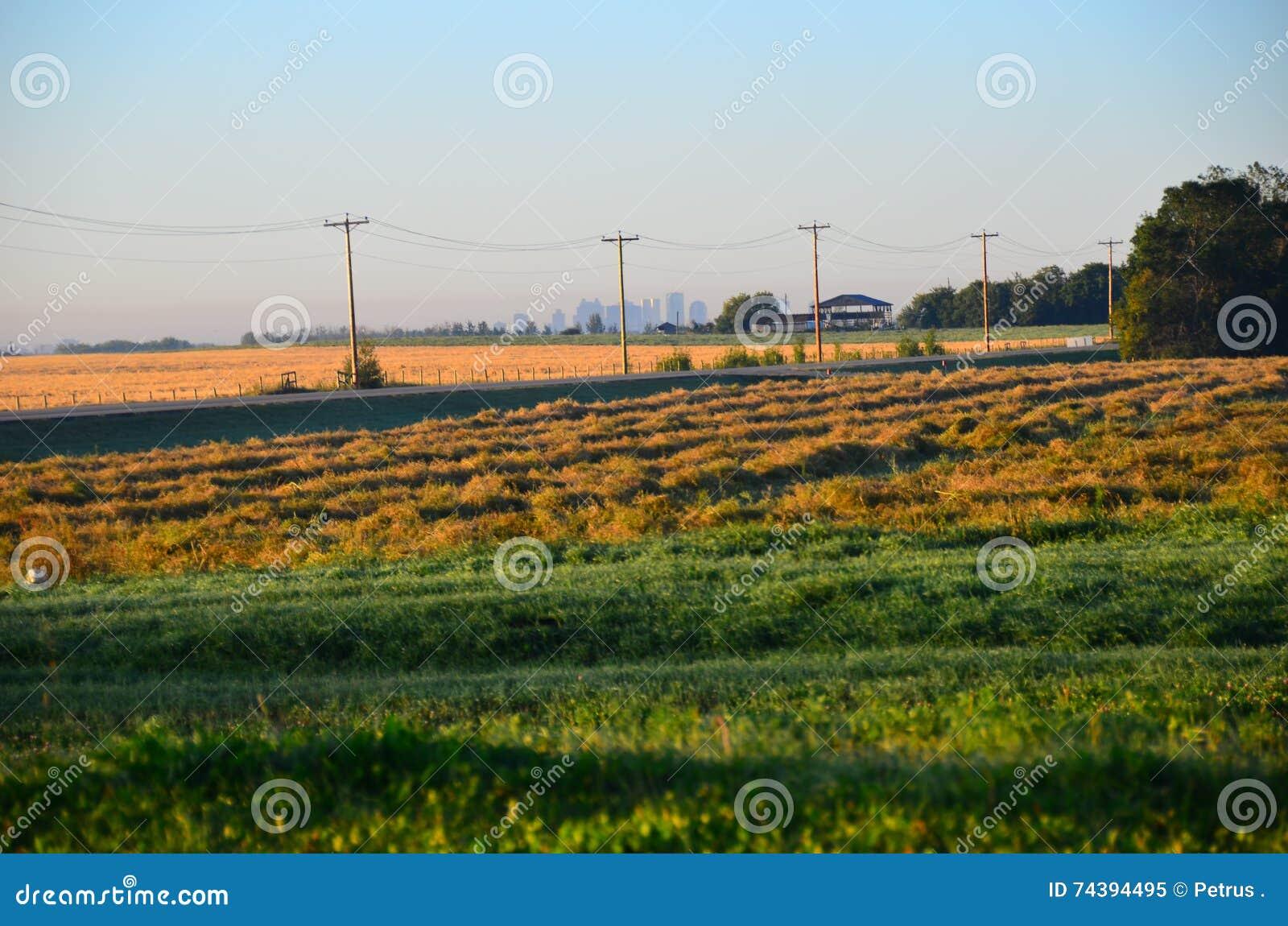 Campos de grão Alberta Canada