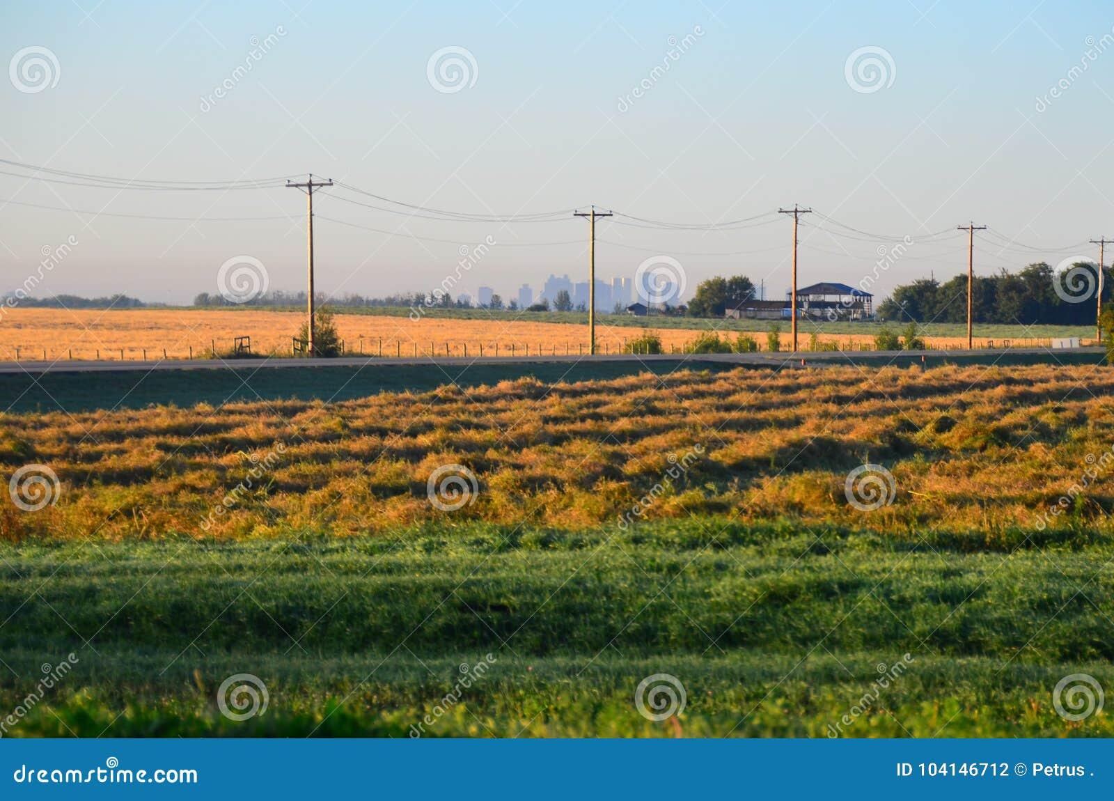 Campos de grão da pradaria, Edmonton, Alberta, Canadá