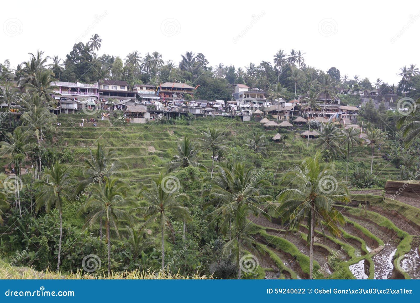 Download Campos De La Terraza Del Arroz Foto de archivo - Imagen de fango, campos: 59240622
