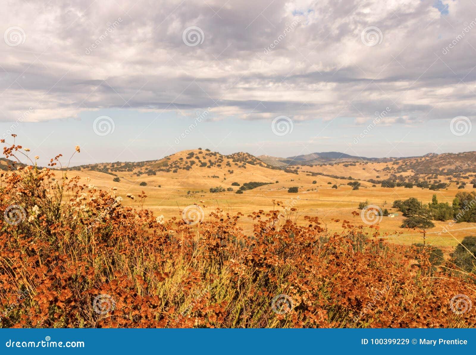 Campos de oro, alforfón, robles, nubes de lluvia del trueno