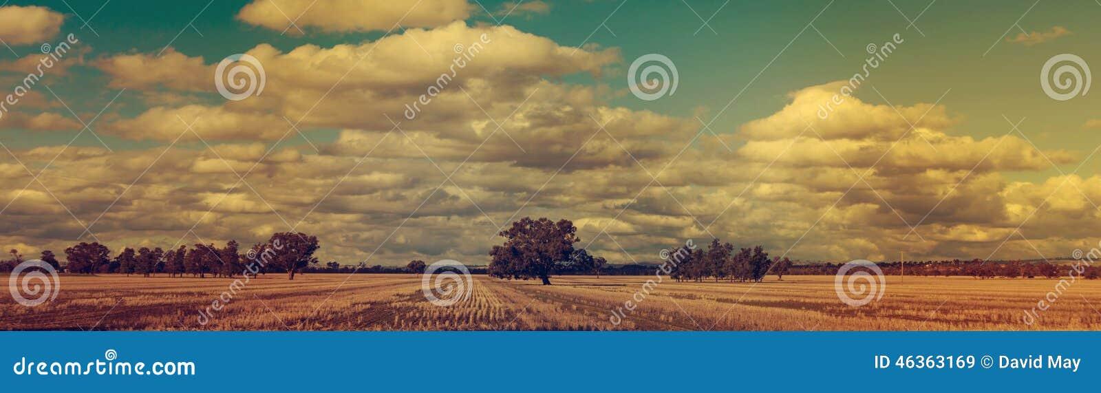 Campos de trigo panorâmicos do por do sol do inverno