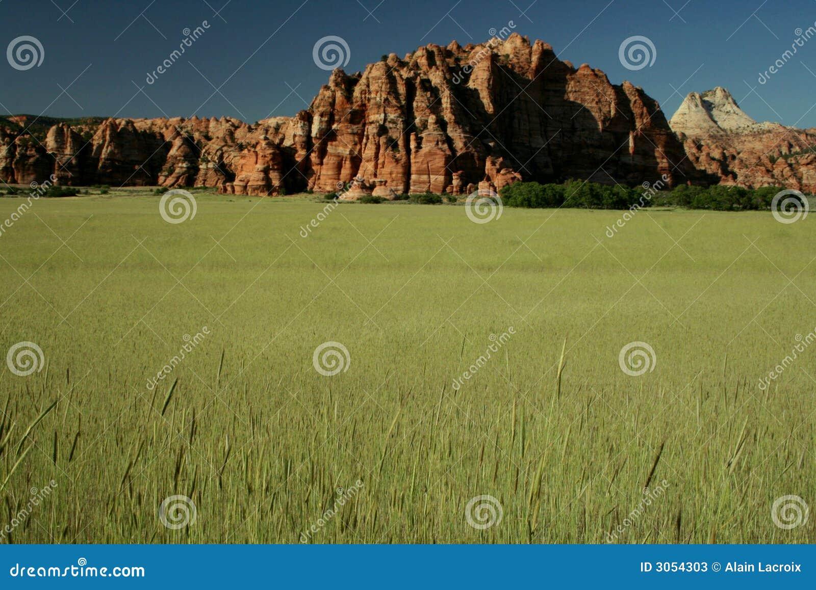 Campos de trigo para sempre