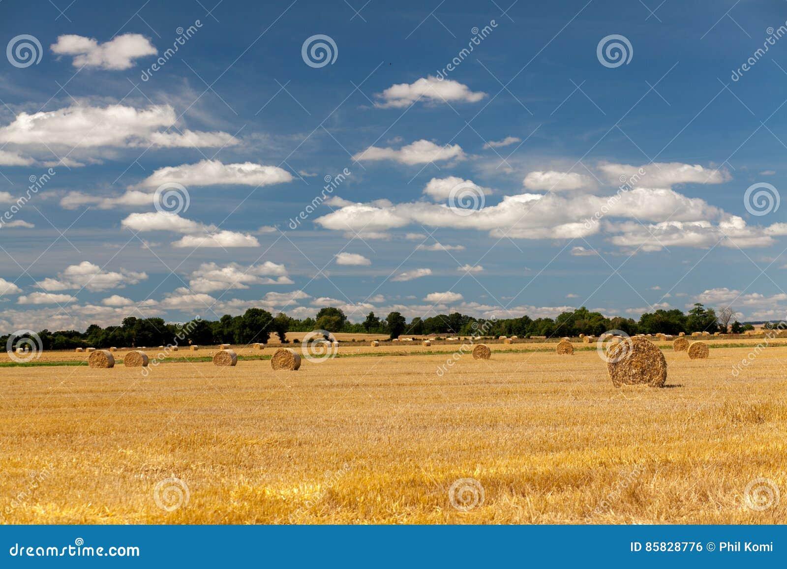 Campos del heno en Normandía