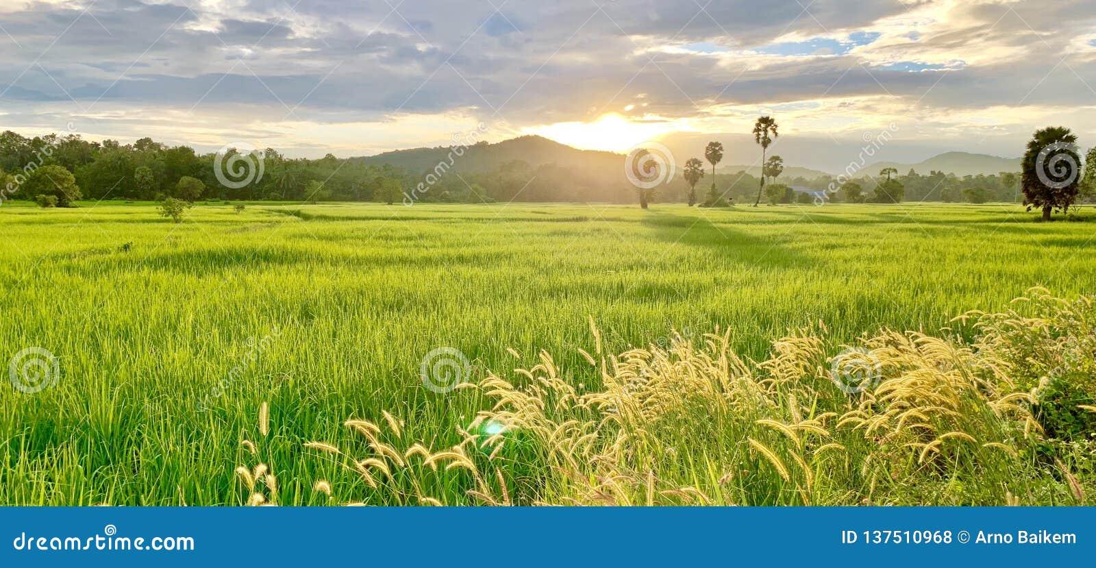 Campos do arroz e estilo de vida do camponês