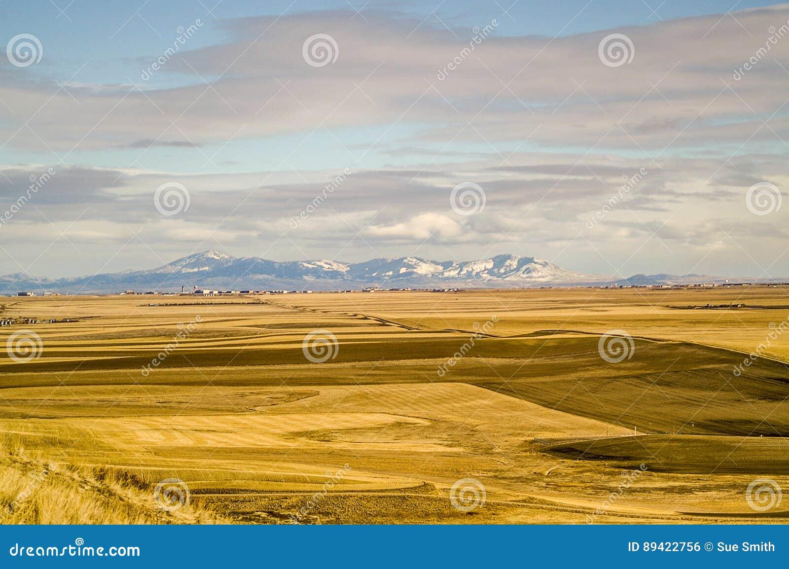 Campos dourados com montanhas