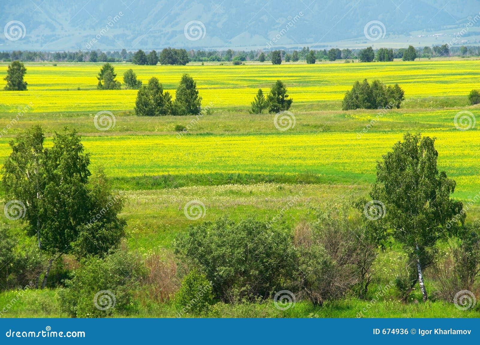 Campos e árvores amarelos.