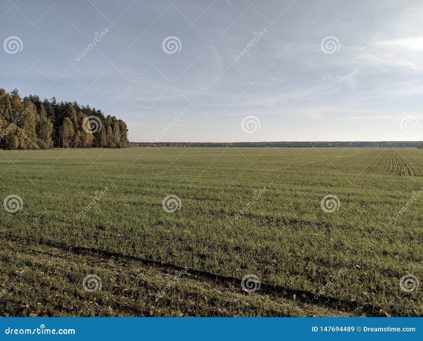Campos e florestas enormes