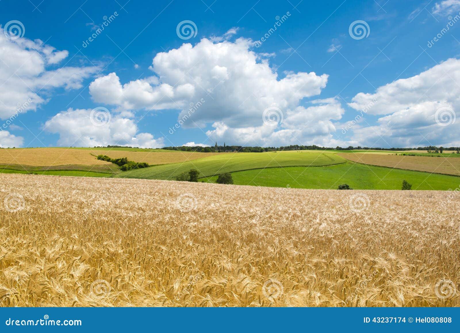 Campos e prados