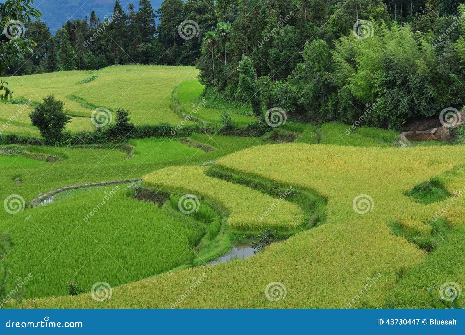 Campos terraced da almofada