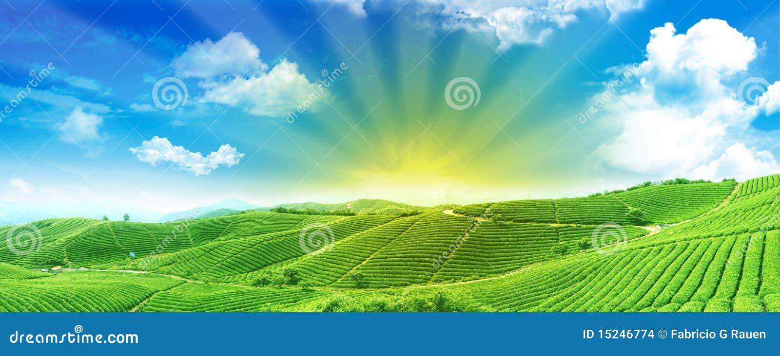 Campos verdes no nascer do sol