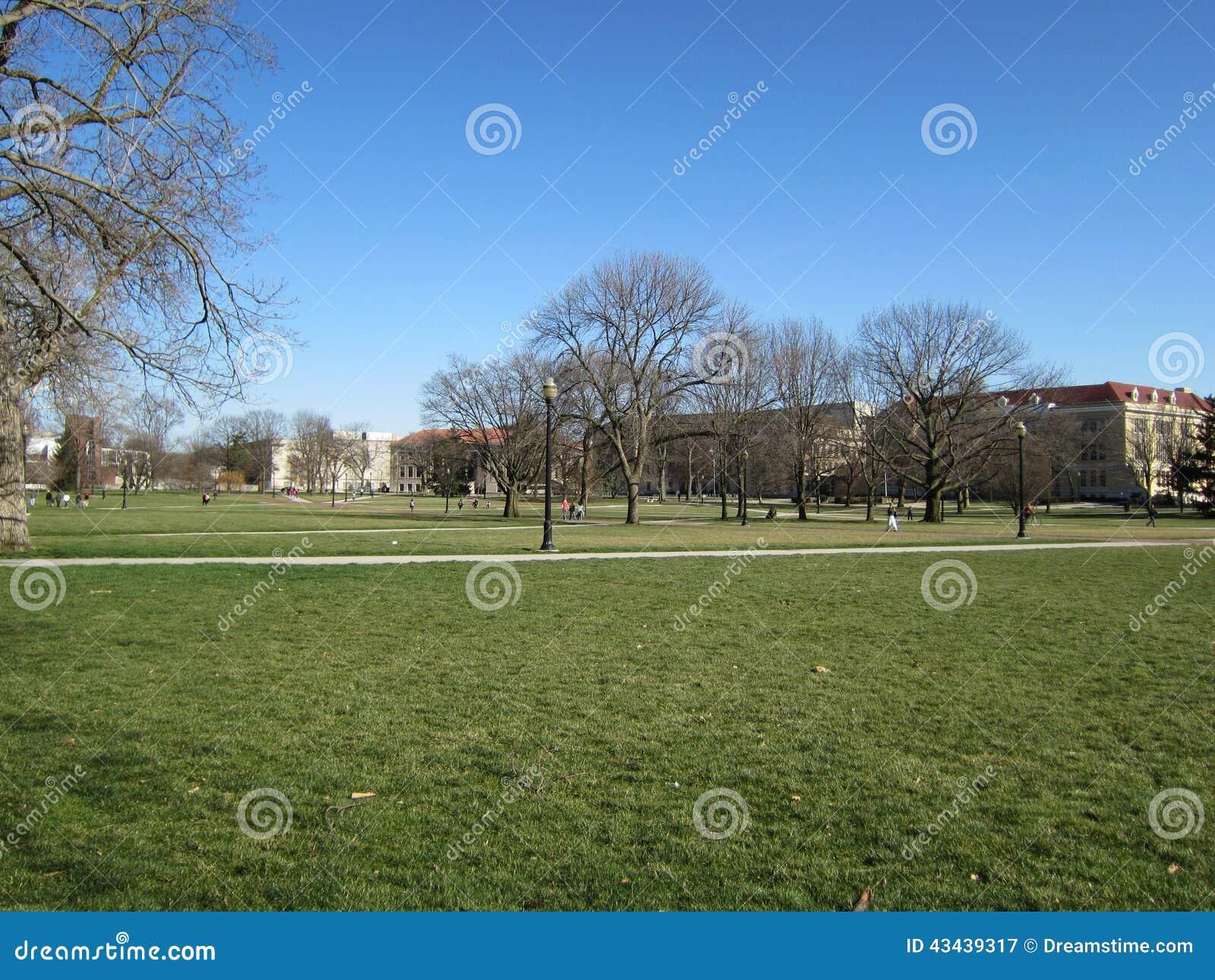 Campus-Rasenfläche