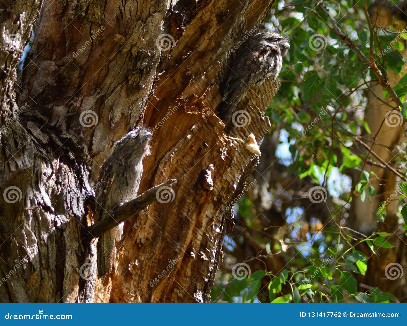 Camuflagem da madeira