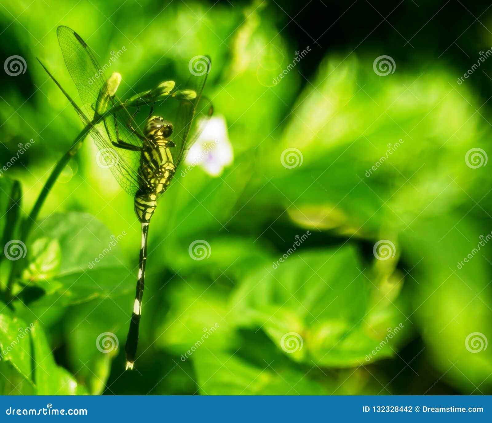 Camuflagem de uma libélula verde